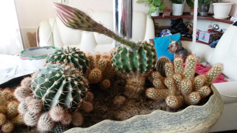 Куколки тропических